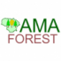 AMA FOREST